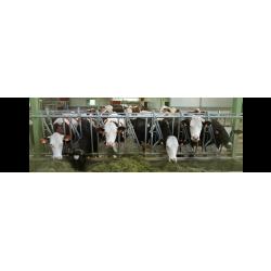 Autocapturas para Vacas